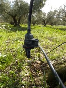 irrigation de l'olivier